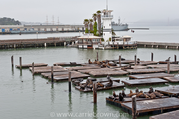 Sealions at Pier 39, San Francisco